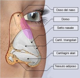 rinoplastica-05-anatomia-m[1]